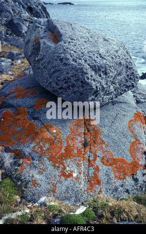 Colourful lichens on rock and boulder deposited by former glacier near Anvers Island Antarctica - Stock Photo