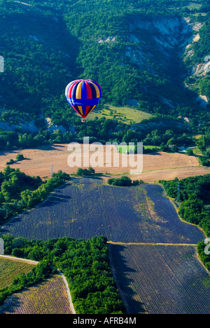 Hot air balloon flying over lavender fields in Provence, Southern France - Stock Photo