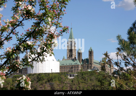 Cherry Blossoms in spring time in Canada Ontario Ottawa Capital of Canada Government of Canada Parliament Building - Stock Photo