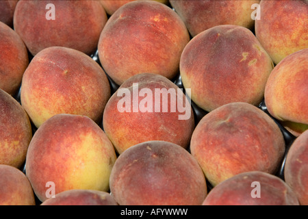 Rows of fresh peaches for sale on stall French market Sudbury Suffolk England - Stock Photo