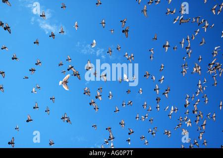 Birds flying over the Old Town Dubtrovnik, Croatia - Stock Photo