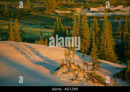 Last light on forested eskers near Whitefish lake, at the head waters of the Thelon river in the Northwest Territories, - Stock Photo