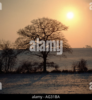 A winter sun setting over a leafless oak tree and countryside with a light snow covering Wiltshire - Stock Photo