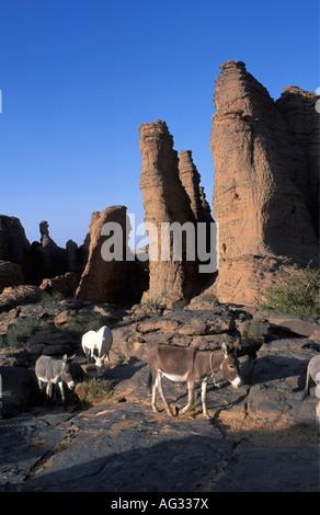 Algeria Djanet Donkeys walking on rocky highland - Stock Photo