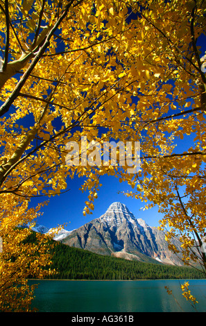 Autumn Colors with Mount Chephren at Waterfowl Lake Banff National Park Alberta Canada - Stock Photo