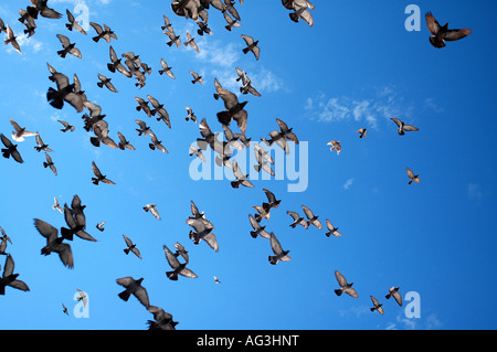 Birds flying over the Old Town Dubtrovnik, Croatia - Stock Photo