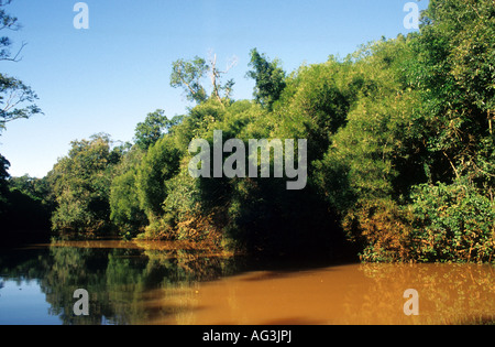 Vegetation -Forest and canes on San Francisco River - Stock Photo