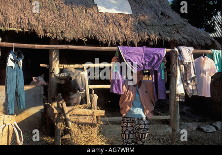 Vietnam Mai Chau: Woman drying clothes with buffalo in background - Stock Photo