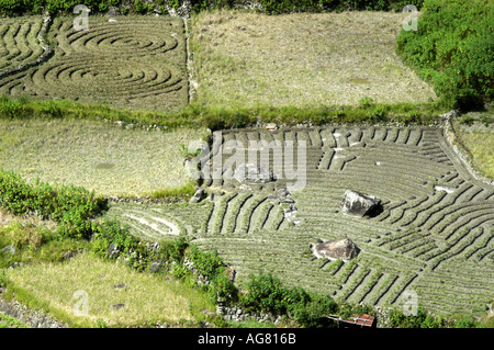 Birds eye view of rice terraces carved out of mountain sides in Northern Philippines - Stock Photo