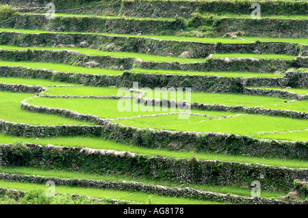 Centuries old rice terraces in Northern Philippines is one of the seven wonders of the world - Stock Photo