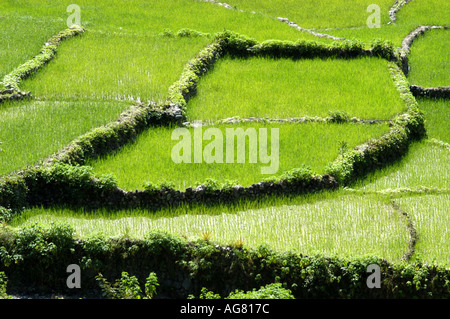 Birds eye view of a detail of centuries old rice terrace in the Philippines - Stock Photo