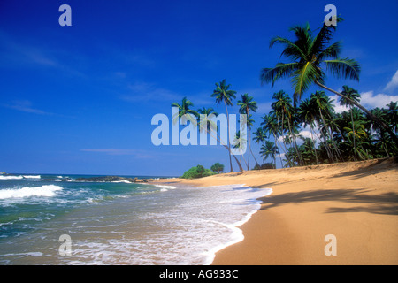Coconut palm trees on tropical beach in Sri Lanka Indian Ocean - Stock Photo