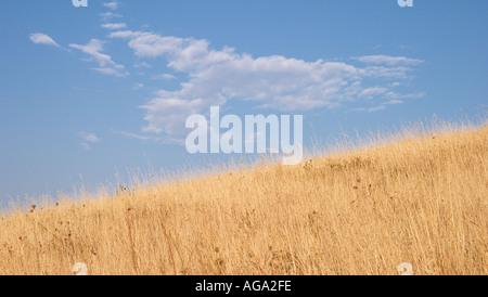 Agrarian landscape Valtrebbia Italy - Stock Photo