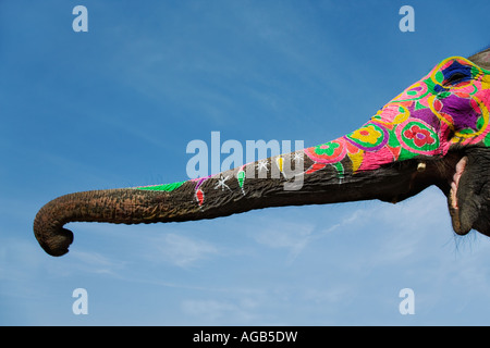 Painted elephant trunk Elephants are decorated for religious and ceremonial occasions India Property released - Stock Photo
