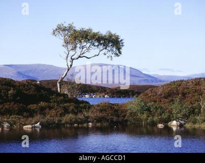 dh Lochan na h Achlaise RANNOCH MOOR ARGYLL Isolated single tree wetland lone highlands barren scotland atmospheric scottish highland lochs lake