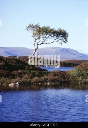 dh Lochan na h Achlaise RANNOCH MOOR ARGYLL Isolated single tree on island lake mountainous wetland terrain