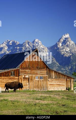 Buffalo and a barn on Mormon Row Grand Teton National Park Wyoming - Stock Photo