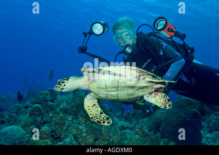 Female photographer with a Hawksbill Turtle Eretmochelys imbriocota on a reef in Little Cayman Cayman Islands - Stock Photo