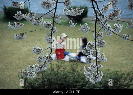 Cherry blossom, Kakunodate, Japan - Stock Photo