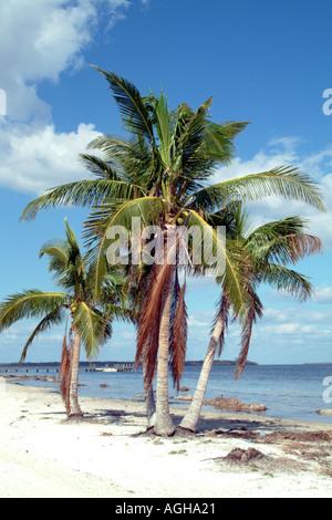 Beach and Palm trees on Captiva Island on Pine Island Sound SW Florida fl USA - Stock Photo