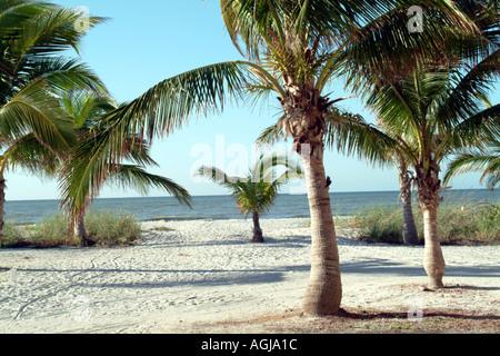 Captiva Island on Pine Island Sound SW Florida fl USA Beaches Palms - Stock Photo
