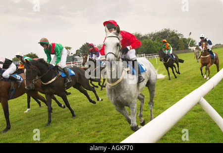 Horses at the start of a race UK - Stock Photo