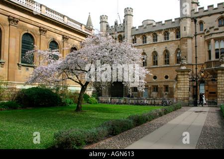 Clare College entrance, Cambridge, England. - Stock Photo