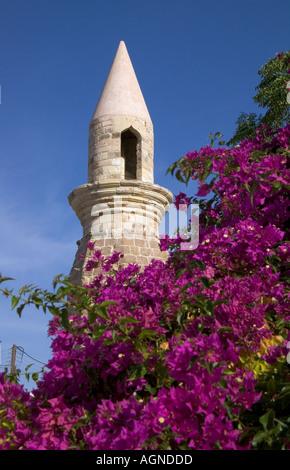 dh  KOS TOWN GREECE KOS Tower minaret purple flowering tree bougainvillea bush