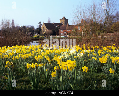 Spring Daffodils By The Village Green And Pond At