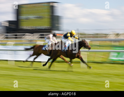Horse racing - two horses in a race for the finishing post - Stock Photo