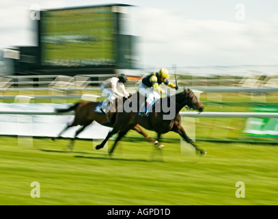 Horses in race for the finishing post, England, UK - Stock Photo