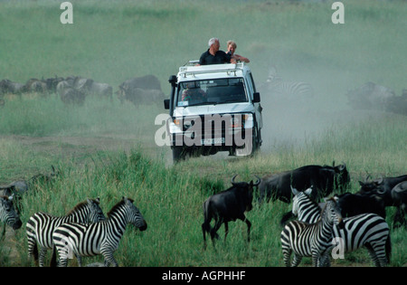 Wildebeest / Common Zebra - Stock Photo