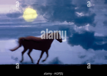 Dark Horse: Horse running as dark clouds accent the sky in the light of the full moon - Stock Photo