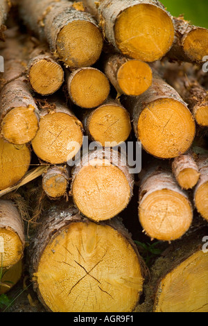 Stacked Tree Logs near Torsby in Varmland County Sweden - Stock Photo