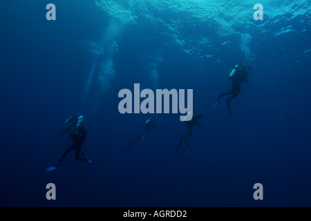 Maldives north male atoll lankan a group of four scuba divers looking for the giant manta ray around the cleaning - Stock Photo