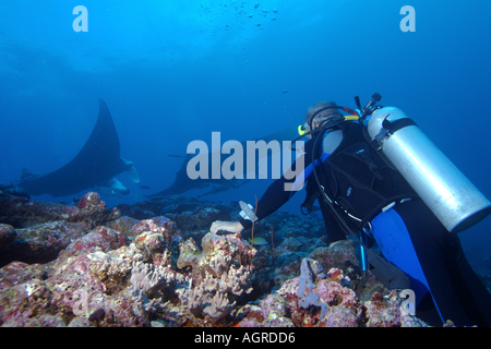 Maldives north male atoll lankan a diver watching two giant manta ray manta birostris around the cleaning - Stock Photo