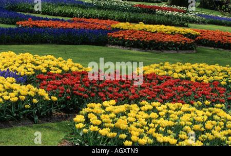 Tulips, Keukenhof, Netherlands - Stock Photo