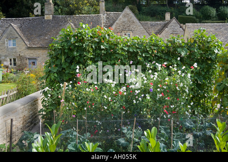 Sweet peas and runner beans growing in a cottage garden in the Cotswold village of Bibury, Gloucestershire - Stock Photo