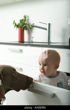 Baby sitting in drawer, being sniffed by dog - Stock Photo