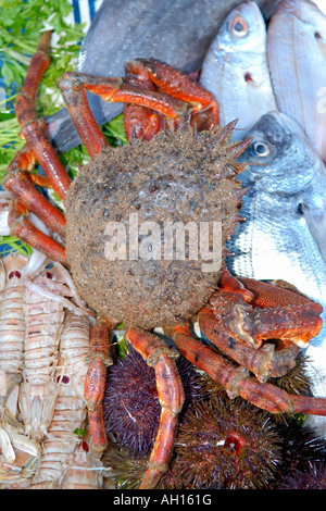 Morocco Essaouira Place Moulay Hassan , typical African scene of fresh crab , fish , sea urchins for sale at outdoors - Stock Photo