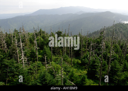 View from Clingman's Dome - Red Spruce, Picea rubens, and Fraser Fir, Abies fraseri, boreal forest at southern location - Stock Photo