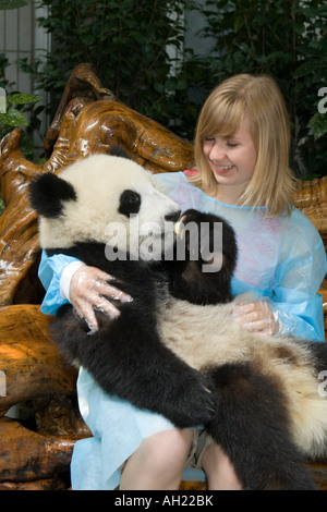 Young girl holding eight month old baby Giant Panda at Chengdu Panda Breeding & Research Centre, Chengdu, Sichuan - Stock Photo
