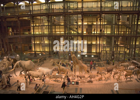 Grande Galerie de l Evolution in the Musee National d Histoire Naturelle - Stock Photo