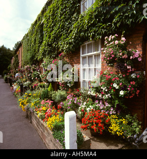 Cheshire Stockport Cheadle village floral front gardens in Lime Grove - Stock Photo