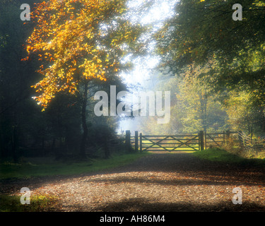 GB - GLOUCESTERSHIRE:  Autumn in the Forest of Dean - Stock Photo
