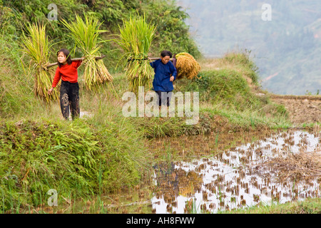 Young Dong Farmer Girl and Old Woman Shoulder Carrying Harvest from the Fields Zhaoxing China - Stock Photo