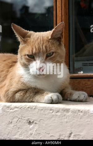 Cat lying on window sill - Stock Photo