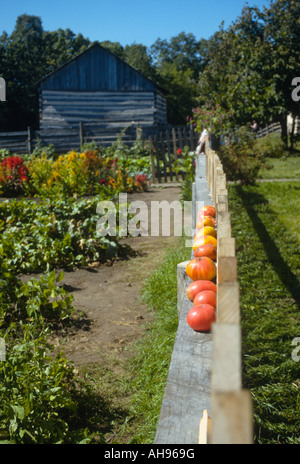 WISCONSIN Eagle Germantown Koepsell Farm Ripe tomatoes on fence ...