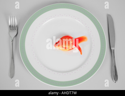 goldfish common carp fantail Carassius auratus auratus served on plate - Stock Photo