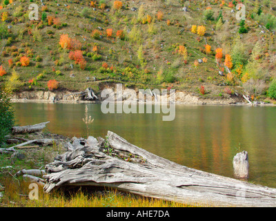 Rejuvenation of Mount St Helens National Volcanic Monument Coldwater Lake WA - Stock Photo